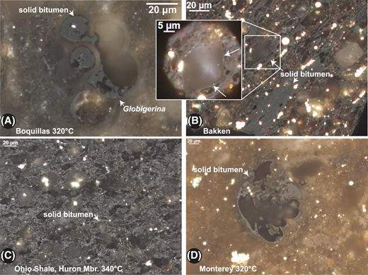 Photomicrographs of example textures used to identify solid bitumen in shale sample starting materials and hydrous-pyrolysis residues. (A) Solid bitumen filling chambers of Globigerina foraminifera in Boquillas Formation (Eagle Ford Formation equivalent) marl in 320°C hydrous-pyrolysis residue (solid-bitumen reflectance [BRo] of 0.52%). (B) Solid bitumen as a groundmass and embayed by euhedral mineral faces (arrows pointing to solid bitumen at margins of carbonate in inset) in the Bakken Shale starting material (BRo of 0.32%). From Hackley and Cardott (2016). (C) Solid bitumen as a groundmass in the Ohio Shale Huron Member (Mbr.) in 340°C hydrous-pyrolysis residue (BRo of 1.02%). (D) Solid bitumen associated with foraminifera in Monterey Formation 320°C hydrous-pyrolysis residue (BRo of 0.61%).