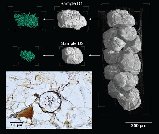 Three-dimensional rendering (right) of the entire set of garnets from Sierra Alpujata, obtained using synchrotron X-μCT (white beam setup). Two grains (samples D1 and D2) were considered for this study. The entire 3D sets of crystallyzed melt (and fluid) inclusions are rendered in green (left). A garnet crystal from the Sierra Alpujata migmatites with crystallized melt inclusions concentrated at the core is shown in the thin section micrograph.