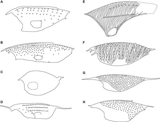 Line drawings of the carapaces of the thylacocephalan genera from the Late Cretaceous Konservat-Lagerstätten of Lebanon (front part to the left). A. Paradollocaris Charbonnier nov. gen. B. Thylacocaris Audo and Charbonnier nov. gen. C. Globulocaris Teruzzi and Charbonnier nov. gen. D. Hamaticaris Charbonnier nov. gen. E. Keelicaris Teruzzi and Charbonnier nov. gen. F. ThylacocephalusLange et al., 2001. F. ProtozoeaDames, 1886. G. PseuderichtusDames, 1886. Line drawings: S. Charbonnier.
