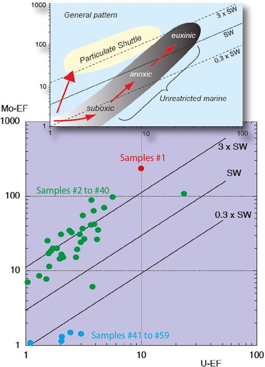 """U–EF vs. Mo–EF crossplot of samples from the Tithonian-Berriasian. The top inset diagram illustrates the general patterns of U–EF vs. Mo–EF covariation in modern marine environments. The grey field represents """"unrestricted marine"""" environments, characteristic of the eastern tropical Pacific, whereas the yellow field represents the """"particulate shuttle"""" trend, characteristic of depositional systems such as the Cariaco Basin, where intense redox cycling of metal oxyhydroxides (especially Mn-bearing) occurs within the water column. XEF=[(X/Al)sample/(X/Al)PAAS], and X and Al stand for the weight concentrations of element X and Al, respectively. Samples are normalized against the post-Archean average shale (PAAS) compositions of Taylor and McLennan (1985). The trace-element distribution indicates that Sample#1 recorded peculiar, probably euxinic, conditions of deposition, while samples#2 to40 recorded conditions of depositions under oxic waters and with reducing conditions developing at shallow depth below the sediment-water interface. Samples#41 to59 recorded fully oxygenated, normal-marine conditions of depositions."""