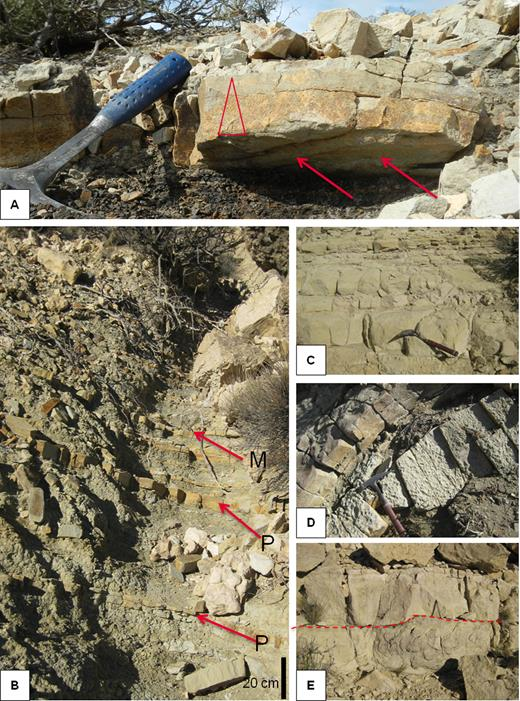 (A) Turbidites of F.A.3. (B) to (E) Facies association 4. (B) Alternation of massive (M) or laminated (P) sandstones (F5) and silty shales (F2) of F.A.4; (C) Sandstones display sharp bases and tops; (D) Some beds contain mud clasts; (E) Sandstone with erosive base (F7) alternating with grey silty shale interbeds (F2).