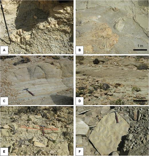 (A) and (B) illustration of sandstone slumps of F.A.5; (C) Fine-grained sandstones with planar laminations (F10); (D) Cross-stratified sandstones (F11). (E) and (F) Sand-rich facies with trough cross-bedding (E) and sinuous ripple morphology (F).