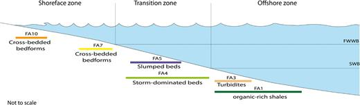 Schematic profile of a siliciclastic shelf profile showing facies association distribution according to Walker and Plint (1992) zonation, corresponding to distribution occurring in the lower part of the studied interval. The location of the different zones is based on the position of the fair weather wave base (FWWB) and the storm wave base (SWB).