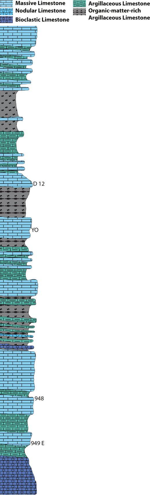Section lithology of Crayssac.