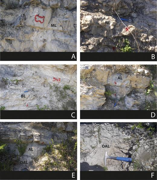 Macroscopic observations of each facies. (A) Massive limestone (ML), (B) Nodular Limestone (NL), (C) Bioclastic Limestone (BL), (D) Argillaceous Limestone (AL), (E) Argillaceous Limestone and Organic matter-rich Argillaceous Limestone (OAL), (F) Organic matter-rich Argillaceous Limestone).