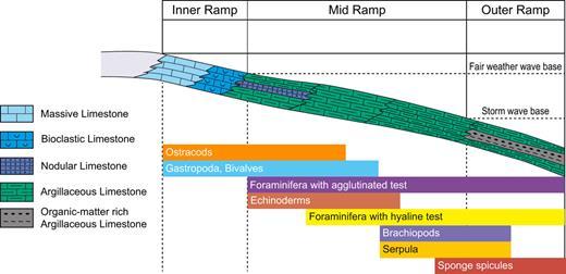 Non-rimmed carbonate shelf type deposition model.