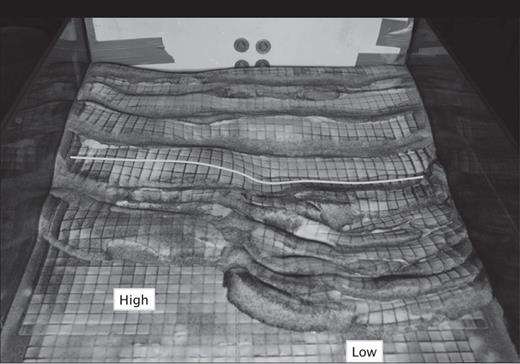 Frontal view of Model 3 (looking toward the backstop). The left-hand side region has no viscous décollement, whereas the right-hand side region comprises a viscous décollement embedded within the cover. Note the marked lateral change in topographic elevation across the model's width (thick white line). The scale is indicated by the 1.5 cm x 1.5 cm passive markers printed on the model's surface.