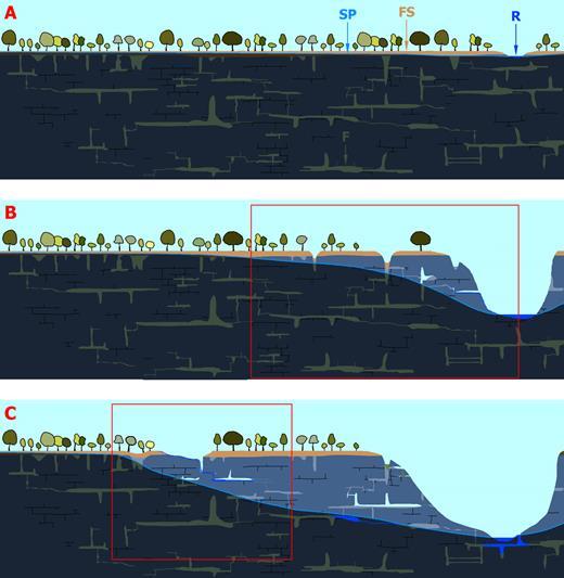Schéma évolutif d'un massif karstifié par fantômisation. En A, un massif calcaire aplani supporte une formation superficielle (formation transgressive, zone profondément altérée, FS) qui est couverte d'une forêt. La rivière (R) qui impose le niveau de base et, donc, la surface piézométrique de l'aquifère (SP) est peu imprimée dans le paysage. Le potentiel hydrodynamique est faible ce qui entraîne des circulations souterraines très lentes. Suivant ce qui a été mis en évidence dans les paragraphes précédents, seule l'altération chimique agit, à l'exclusion de toute érosion mécanique (période biostasique). Le massif se fantômise (F, zones gris-vert). L'altération, suivant les lignes de courant, profite de toutes les fractures et des strates plus perméables pour transformer la roche mère en fantôme de roche. La distribution géométrique de ces fantômes n'est pas dictée par l'écoulement mais par l'allure des zones à perméabilité initiale plus forte. En B, le massif s'étant soulevé, la rivière s'est incisée et a abaissé la surface piézométrique dans sa zone d'influence. Le cadre rouge détaille les phénomènes proches du versant (Fig. 17b: vidange de fantômes de roche, résurgence, formation de puits en surface. L'allure de la surface piézométrique est ici purement indicative et dépend de la distribution de la perméabilité au sein du massif fantômisé. En C, l'incision fluviatile s'est accentuée. Le recoupement d'un fantôme de roche profond a conduit à la formation d'une source vauclusienne. Un certain volume de l'altérite résiduelle a été érodé (exemple des sources de la Touvre, en Charente). Le cadre rouge détaille des phénomènes en amont du système (Fig. 17c): tassement et érosion de l'altérite sur le parcours d'une circulation souterraine, perte, ouverture de grottes.