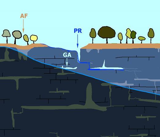 Agrandissement du second cadre rouge. Dans l'amont du système, une perte s'est formée (PR) par capture d'un ruisseau aérien dans un fantôme de roche vidé. L'érosion élimine de plus en plus d'altérite. La circulation s'est amorcée, qui évoluera vers une connexion perte-résurgence, laquelle évoluera ensuite sur un mode fluviatile. Un affaissement s'amorce avec basculement des arbres et soutirage de la formation de couverture (AF).