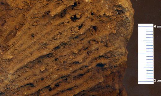 Fossile de Syringopora fantômisé. Les clastes du fossile sont encore cohérents mais la matrice est pulvérulente.