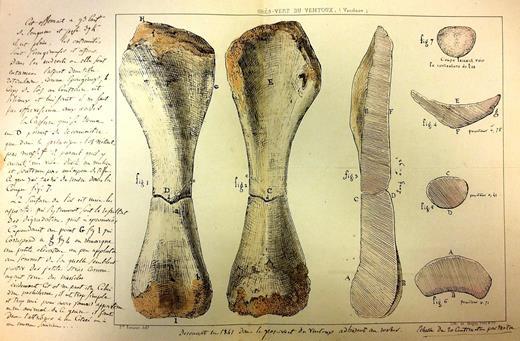 Lithographie inédite, coloriée à la main, exécutée par l'imprimerie lithographique Magny, Petit et compagnie à Avignon d'après des dessins du géologue et architecte Prosper Renaux [BCM BLA 12(1)]. Cette planche représente un humérus de sauropode découvert par ce dernier dans le Grès Vert (Albien) du mont Ventoux (Vaucluse). Les notes dans les marges de la feuille, de la main de Renaux, décrivent le spécimen et indiquent qu'il fut trouvé en 1841. Renaux envoya ce document à Henri Marie Ducrotay de Blainville le 13août 1842. Le spécimen représenté servit d'holotype à l'Aepisaurus elephantinus décrit par Paul Gervais en 1852. © Muséum national d'Histoire naturelle (Paris)–Direction des bibliothèques et de la documentation.