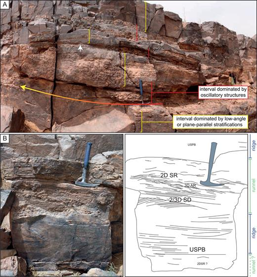 The Zini Formation (Floian, Early Ordovician) outcrops in the central Anti-Atlas of Morocco (Zagora area) and is interpreted as a wave dominated ridge and runnel intertidal zone (Vaucher et al., 2017). (A) The sandstones of the Zini Formation consist of an alternation of beds dominated by symmetrical and slightly asymmetrical oscillatory sedimentary structures of various sizes (red part) sandwiched between more massive beds, which mainly exhibit low-angle- or plane-parallel stratifications (yellow part). White arrow points to the limited lateral extension of oscillatory structures dominated interval. Red-to-yellow arrow shows the lateral transition from oscillatory structures dominated interval to low-angle or plane-parallel stratifications dominated interval. (B) Detailed section of the Zini Formation showing the transition between sedimentary structures characterizing the ridge part (Upper Stage Plane Beds) and the runnel part (2D Symmetrical Ripples, 3D Asymmetrical Ripples and 2D/3D Symmetrical Dunes). Scale: hammer is 32 cm long.