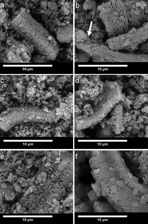 SEM micrographs (10,000 ×) of kaolinite (0.3 g) dispersedin 5 mL of cyclohexane after (a) 0 h drying, (b) 0 h drying with 0.075 g ethyl cellulose, (c) 4 h drying, (d) 4 h drying with 0.075 g ethyl cellulose, (e) 7 h drying, and (f)7 h drying with 0.075 g ethyl cellulose.