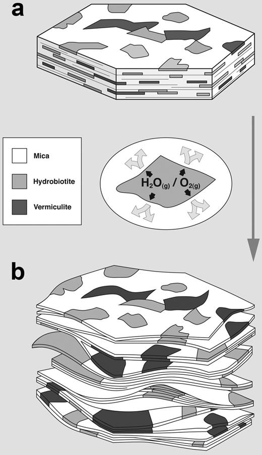 Mechanism of exfoliation: (a) particle variously consisting of intergrown mosaic of vermiculite, hydrobiotite and mica domains (or vermiculite and chlorite domains). Gas phases produced by shock thermal treatment, or breakdown of hydrogen peroxide are trapped in dead ends at phase boundaries causing pressure build up. The result (b) is exfoliation of the layers.