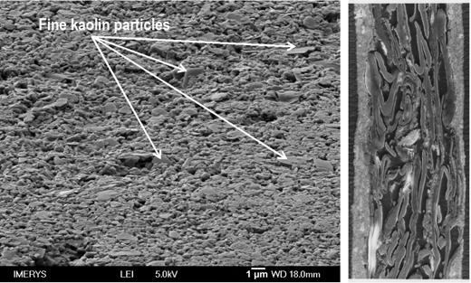 Scanning electron micrographs of the surface (left) and cross section of a lightweight coated (LWC) magazine paper (right).