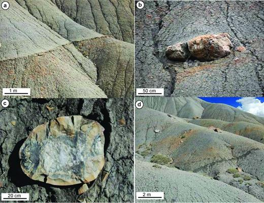 Outcrop expressions of carbonate cement. (a) Thin (∼20 cm in thickness) carbonate-cemented horizon capping a 3 m coarsening-upward unit. (b) Isolated carbonate concretionary body. (c) Details of an isolated septarian concretion. (d) Strata-bound isolated concretions.