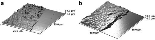AFM images (a) of the PANI and (b) of the PANI/MMT thin films.
