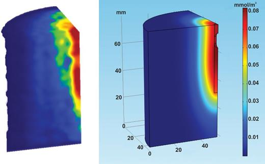 Optimum fit of the PET tracer distribution (left) with a Comsol Multiphysics FEM model (right) (scaled in molar concentrations).