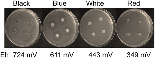 Zones of E. coli growth inhibition by disk diffusion away from hydrated clays taken from the major alteration assemblages identified in the OMT deposit.