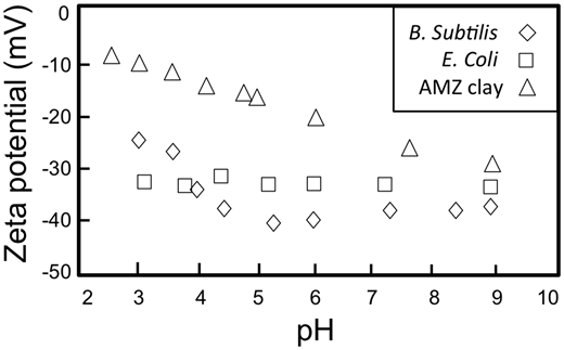 Zeta potential of two model bacterial pathogens compared to the AMZ clay suspension in DIW (equilibrated for 24 h).