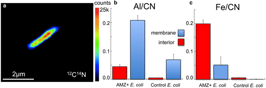NanoSIMS measurement of Al and Fe distribution in E. coli treated with AMZ clay. Negative ion counts of: (a) matrix CN−; (b) Al/CN ratios in the AMZ-treated E. coli compared to untreated control; and (c) Fe/CN ratios accumulated over membrane vs. interior.