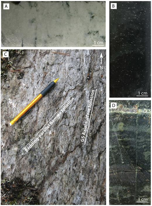 Photographs of rock types in the stratigraphic footwall to the stratiform Zn-Pb ore. A: Massive dolomite marble with minor dark-green actinolite. B: Dark-gray finely feldspar + quartzphyric rhyolitic sandstone with minute porphyroblasts of sillimanite and garnet. C: Sericite-altered and compacted large pumice clasts (fiamme) in the footwall feldspar + quartzphyric rhyolitic pumice breccia. The former pumice clasts are aligned parallel to S0 and are crenulated by S1. D: Banded magnetite-actinolite-epidote-garnet rock from the lower Lovisa iron formation. E: Massive K-feldspar + quartzphyric rhyolite. F: Pink rhyolitic ash-siltstone with interbands of sericite-chlorite schist parallel to S0. The sericite-chlorite schists have a subparallel foliation defined by alignment of mica, which is crenulated by a spaced S1 foliation, which is here clearly visible in the ash-siltstone. The mica bands are rich in ca. 2- to 3-mm-round quartz phenocrysts. Pink rhyolitic ash-siltstone with streaks and blotches of clinochlore-pyrite-K-feldspar. The pink ground mass also carries tiny crystals of pyrite. G: Pink rhyolitic ash-siltstone with pyrite-porphyroblastic clinochlore patches.