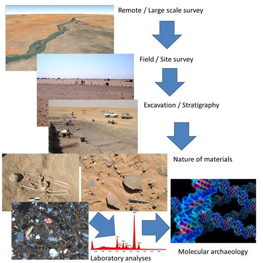 Investigating an archaeological site is carried out on a wide range of scales. Each scale involves specific disciplines/techniques and yields specific information that together leads to a holistic interpretation of the site and its context.
