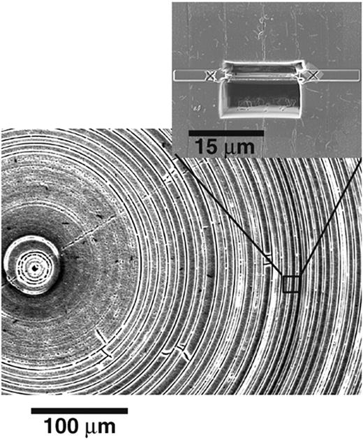 SE image of an HF etched cross section of the needle-like structure of a deep-sea sponge monorhapis chuni. The inserted image shows the location of a TEM foil cut with FIB.