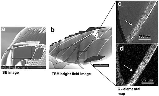 TEM foil cut from a cross section from the needle-like structure of the deep-sea sponge monorhapis chuni. a) SE image of the foil still resting in the excavation site (Scale bar is 5 μ). b) TEM bright field image of the foil. The dark contrast on top of the foil is due to the platinum layer. The net-like structure with dark grey contrast corresponds to the holey carbon support film. The boxed area is displayed in more detail in c) and d), which show in grey contrast the water-rich opal and in bright contrast organic, carbon-rich material. d) The C- elemental map (EELS, three-window technique) exhibits the distribution of the organic material. The light grey contrast in the left part of the image corresponds to the carbon support film.