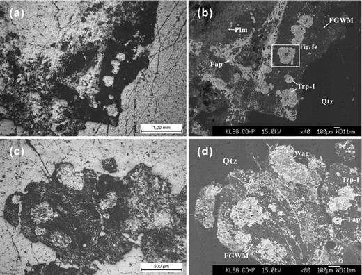 Photomicrographs and backscattered-electron (BSE) images of the triphylite-I (sample NP-36, zone III) in fine-grained white muscovite interstitial to quartz. (a, b) Triphylite-I grains associated with palermoite, lazulite, fluorapatite, etc. (c, d) Triphylite-I grains associated with wagnerite and fluorapatite. Abbr.: Trp-I – triphylite-I, Fap – fluorapatite, Wag – wagnerite, Plm – palermoite, Qtz – quartz, FGWM – fine-grained white mica.