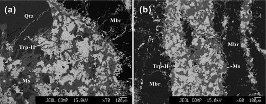 BSE images of the triphylite-II assemblages. (a) Triphylite-II + fine-grained white muscovite assemblages between quartz and montebrasite (sample NP-30, zone IV). (b) Triphylite -II + narrow muscovite veins in montebrasite (sample NP-2, zone IV). Abbr.: Trp-II –triphylite-II, Mbr – montebrasite, Qtz – quartz, Ms – muscovite.