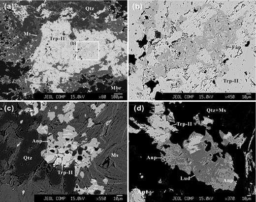 BSE images of alteration assemblages of triphylite-II. (a, b) Triphylite-II altered to fluorapatite (sample NP-2, zone IV). (c) Triphylite-II replaced by anapaite (sample NP-30, zone IV). (d) Triphylite-II altered to ludlamite and anapaite (sample NP-30, zone IV). Abbr.: Trp-II – triphylite-II, Anp – anapaite, Lud – ludlamite, Fap – fluorapatite, Mbr – montebrasite, Qtz – quartz, Ms –muscovite.
