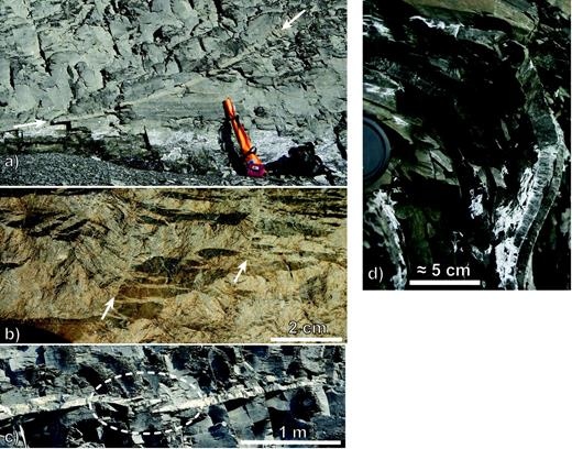 Images documenting CIC and BF calcite mineralization field relationships. (a)              Light-coloured CIC/BF mineralization overprinting a soft-sediment fault (white arrows)              with a hanging-wall flat and footwall cut-off. The lighter band along the fault is              CIC/BF mineralization. Rifle case (lower right) for scale. (b) Field photo of finely              branching and complex CIC aggregates defining fault subparallel fracture features.              Image contrast was increased to highlight aggregates. White arrows: two surfaces              linking fault-parallel calcite aggregates with CIC and BF fabric evident in              thin-sections. Camera lens cap (lower left) for scale. (c) CIC/BF subhorizontal              aggregates (unassociated with a fault zone) conformable to bedding and fissility. Note              linking tip curls in the area outlined with a dashed ellipse. (d) Image of folded and              bedding-parallel fibrous calcite vein (BF) in black shales. Note the shale fissility              is also folded.
