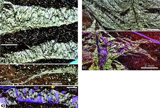 Photomicrograph mosaics showing character of CIC aggregates. (a) Two sheet                'fractures' of CIC aggregates (sample 12ED16A), plain light. Up is stratigraphically                up. 1 – curved, but smooth and well-defined nucleation surface defined by a medial                concentration of fluid inclusions and adjacent finer-grained and variably oriented                calcite; 2 – irregular upper margin defined by nested CIC florets with                concave-upwards sediment contact; 3 – cone walls/septa defined by sediment grain                traces that can be traced up to upper crack margin; 4 – small cones that open                downwards on the 'underside' of the fracture. (b) Same sample as in (a), plain                light. Vein tip partially ornamented by fibrous calcite. Arrows mark a medial suture                zone with concentrated fluid and opaque conclusions. 1 – calcite fibres oblique to                the nucleation fracture and with an stepped upper boundary; 2 – position on vein                left of which fibrous calcite growth is absent (calcite fibre fringe tapers in same                direction as the vein tapers); 3 – framboidal pyrite. (c) Mosaic from sample 12ED20,                with crossed polars and gypsum plate. 1 – fossil platelet on which CIC growth                nucleated; 2 – mixed BF and CIC aggregates; 3 – tip of fracture that grew past                nucleating platelet. (d) Photomicrograph mosaic (sample 12ED16A) with branching                structure, plain light. 1 – steeply dipping fracture surface characterized by                smaller grain size and concentrated fluid and solid inclusions; 2 – framboidal                pyrite along a soft-sediment deformation fabric; 3 – proximal CIC axes roughly 45°                to 1; 4 – more distal reoriented and upwards-directed CIC aggregate, similar to                bedding-parallel fracture aggregates in (a). (e) Photomicrograph mosaic (12ED12),         