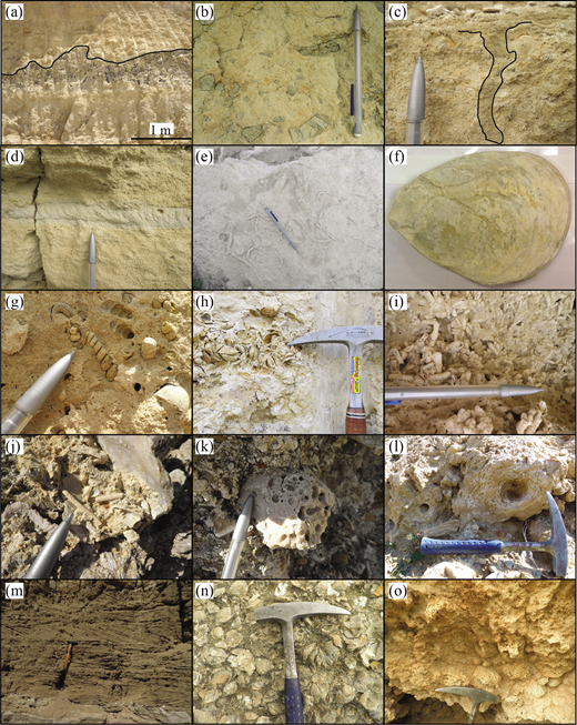 (Colour online) Photographs of key field features of the Athalassa (Gürpınar) Formation: (a) erosional surface within the B1 grainstone; (b) reworked clasts of marl within the B1 grainstone; (c, d) vertical section through Thalassinoides ichnofacies within the B1 grainstone; (e) Thalassinoides on a horizontal bedding surface; (f) Ostrea bivalve shell (c. 10 cm long); (g) casts of the gastropod Turritellidae; (h) casts of bivalves; (i) Cladocora coral; (j) bryozoan-rich deposit; (k) bored clast; (l) algae; (m) low-angle cross-bedding; (n) Ostrea-rich floatstone; and (o) oncoid-rich floatstone (oncolite). Pencil length for scale is c. 15 cm; hammer head length is c. 30 cm.