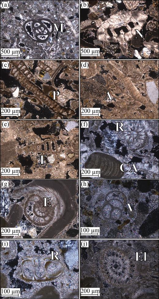 (Colour online) Photomicrographs of benthic foraminifera from the Athalassa (Gürpınar) Formation in the northern Mesaoria (Mesarya) Plain and the Karpaz (Karpas) Peninsula: (a) Miliolida [M]; (b) Neorotalia [N]; (c) Peneroplidae [P]; (d) Anomalina [A]; (e) Textulariidae [T]; (f) Rotaliidae [R] and calcareous red algae [CA]; (g) Eponides [E]; (h) Valvulina [V]; (i) Rotaliidae [R]; and (j) Elphidium [E].