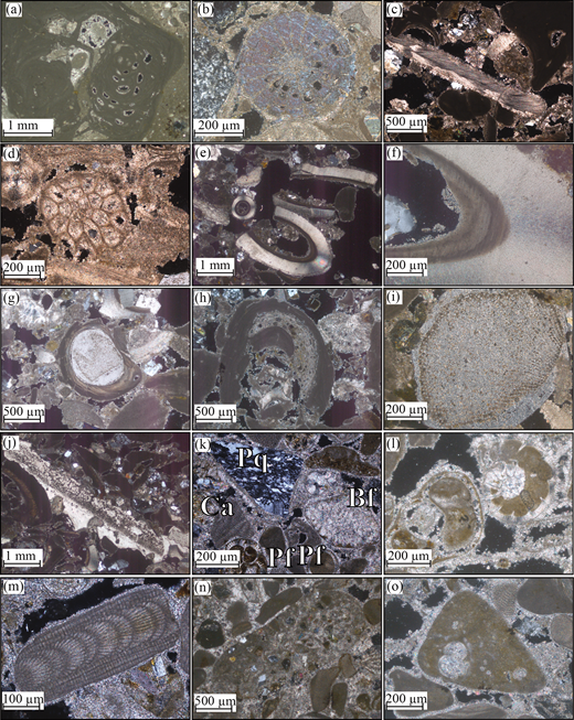 (Colour online) Photomicrographs of carbonate and clastic grains within the Athalassa (Gürpınar) Formation in the area studied: (a) calcareous red algae; (b) echinoderm plate; (c) bivalve fragment; (d) bryozoan; (e) reworked serpulid worm tubes; (f) algal growth on inner serpulid worm tube; (g) echinoderm with encrusting algae; (h) reworked clast of algae with encrusting calcareous red algae; (i) echinoderm plate with algal overgrowth; (j) echinoderm plate with algal overgrowth; (k) polycrystalline quartz [Pf], calcareous red algae [Ca], benthic foraminifera [Bf] and planktonic foraminifera [Pf]; (l) reworked benthic foraminifera with microbial cement infilling chambers; (m) reworked grain of calcareous red algae; (n) reworked grain of grainstone; and (o) reworked grain of marl with planktonic foraminifera.