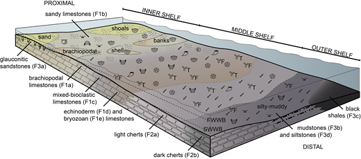 (Colour online) Schematic depositional model for the Kapp Starostin Formation, showing main facies associations and fossil assemblages of the inner, middle and outer shelf zones (modified from Blomeier et al. 2013). FWWB = fair weather wave base; SWWB = storm weather wave base. Facies descriptions are provided in Table 1.