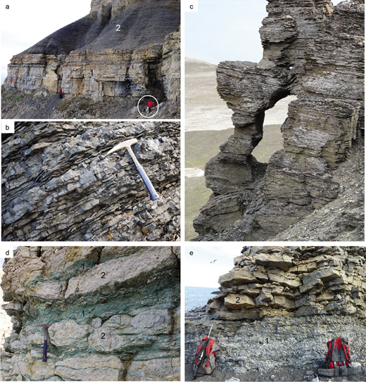 (Colour online) Photographs of the dominant lithologies and facies types of the Kapp Starostin Formation. (a) At Kapp Fleur de Lys (section KF), the Vøringen Member (1), which mainly consists of coarse-grained, brachiopod-dominated skeletal floatstones and rudstones is overlain by a thick succession (2) of dark cherts interbedding with black shales and silicified mudstones. Person for scale = 1.8 m tall. (b) Close-up of the dark chert succession overlying the Vøringen Member at Festningen (section FN). The bedding of the medium- to thin-bedded cherts is due to black shale partings and intercalations of thin shale horizons. Hammer for scale = 33 cm long. (c) A monotonous, several metres thick, horizontally bedded succession of siltstones and paper shales forming a part of sequence TR4 at Tålmodryggen (section TRN). Field of view c. 8 m high. (d) An intercalation of glauconitic sandstones (1) and coarse-grained, brachiopod-dominated floatstones and rudstones (2) within sequence TR4 at Selanderneset (section S). Hammer for scale. (e) An association of light-coloured, massive cherts (1), overlain by a bed-set of thick- to thin-bedded bryozoan grainstones (2) in sequence TR3 at Festningen (section FN). Hammer (centre of photograph) for scale.