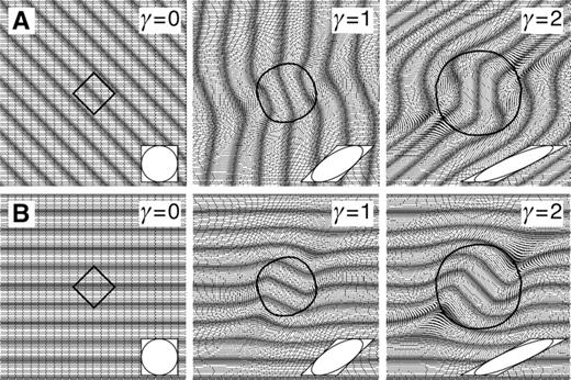 Numerical simulation of the development of inclusion patterns in a growing porphyroblast. A: An initially square object and a foliation at 45° to the horizontal shear plane. Because the porphyroblast initially rotates at about the same rate as the shortening foliation, a millipede inclusion pattern develops. B: Identical experiment, but with the foliation starting parallel to the shear plane. Now the porphyroblast rotates faster than the foliation, and a spiral inclusion pattern develops. Insets show dextral finite simple shear strain (γ) of 0, 1, and 2.