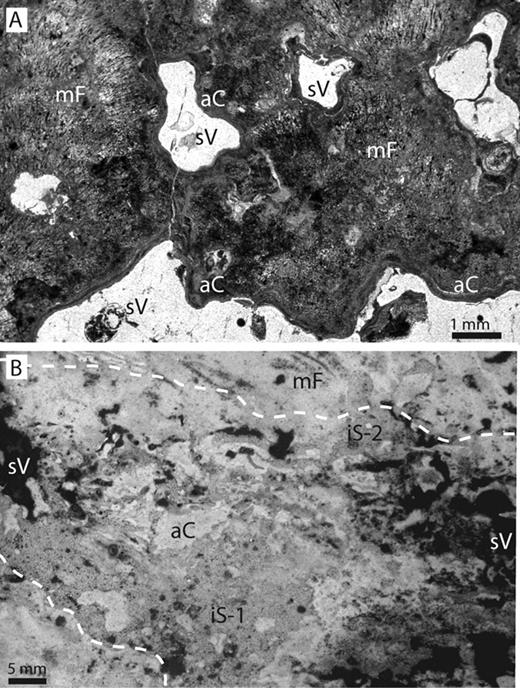 A: Example of partially cement-filled, irregularly shaped voids from a weakly laminated section of a modern microbialite at Lake Thetis, from Geological Survey of Western Australia Sample # F46287, Perth. B: Example of a void in a modern Bahamian microbialite partially filled with multiple generations of internal sediment and authigenic carbonate precipitates, from sample AC-1, stored at the Comparative Sedimentology Laboratory, Miami, Florida. aC—authigenic carbonate; iS—internal sediment; mF—microbial growth fabric; sV—secondary void; white line outlines filled void.