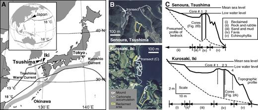 A: Location of Iki and Tsushima Islands. Isolines are for winter sea-surface temperatures (SSTs). B: Aerial photographs taken in 1986 and 1977 for Kurosaki and Senoura, respectively, showing extent of mounds and carbonate accumulation. C: Topographic profiles and zonation and location and number of cores. Bold solid lines—this study; dashed lines—Yamano et al. (2001).