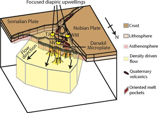Proposed model where passive upwelling of asthenosphere in mantle beneath Afar, Ethiopia, gives rise to melt-filled mantle above 75 km (Rychert et al., 2012), with melt oriented at rift axis causing significant seismic anisotropy (Kendall et al., 2006; Gao et al., 2010) and large velocity anomalies. Superimposed on this are focused diapiric thermal upwellings. These focused anomalies cause enhanced melting at three locations: triple junction (TJ), Nabro volcano (NV), and western margin (WM).
