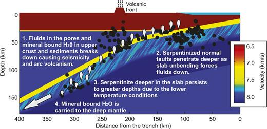 Summary of subduction zone structure inferred for waveform modeling of dispersed P-wave arrivals. Hydration of slab mantle is described by von Kármán function, which provides large-scale elongate structures representing normal fault structures inferred. Smaller scale structures are required to provide observed P-wave coda. Fault depth increase with distance from outer rise is due to downward forcing of fluids (Faccenda et al., 2009, 2012). Black dots show Wadati-Benioff zone (northern Japan) seismicity. Approximate depth at which mineral-bound water is released is shown by white balloon shapes. Some mineral-bound water is delivered to mantle transition zone (e.g., Rüpke et al., 2004; Savage, 2012), indicated by white arrow. Depth of penetration of these hydrated fault zone structures is controlled by temperature at which serpentinite is stable. As slab is heated at depth, stability field of serpentinite becomes restricted to cool core of slab.