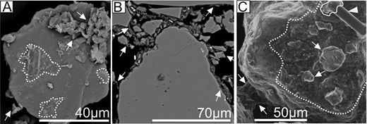 Backscattered electron and environmental scanning electron microscope (SEM) images of clay-coated grains. Arrows indicate clay coatings. Dashed lines outline the extent of the biofilm coats on the grain surface. A: SEM image of loose sediment. B: Thin section of clay-coated sand grains from an intertidal estuarine setting. C: Environmental SEM image of hydrated sediment. Triangle in top right points to a diatom with excreted extracellular polymeric substance grain attachment outlined.