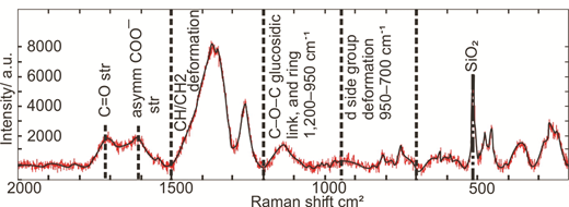 Laser Raman fingerprint of a clay-coated grain. The Raman spectrum is of the tidal flat sediment, imaged in Figure 1. The chemical signature is representative of an organic-rich mixture that is typical of a biofilm (Ivleva et al., 2009) Abbreviations: asymm—asymmetrical; str—stretching.