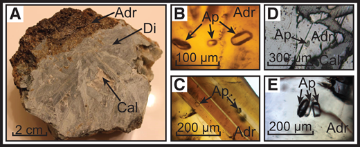 A: A typical sample from Casting Copper (Yerington district, Nevada, USA) that is almost entirely composed of andradite and diopsidic pyroxene. B: Several apatite inclusions within garnet host. C: Two apatite inclusions in garnet exhibiting well-developed growth zones. D: Apatite inclusion exposed at the surface of the garnet host. E: Cluster of apatite inclusions within garnet. B, C, and E are in plane polarized transmitted light; D is in reflected light. Mineral abbreviations: Adr—andradite, Di—diopside, Cal—calcite, Ap—apatite.