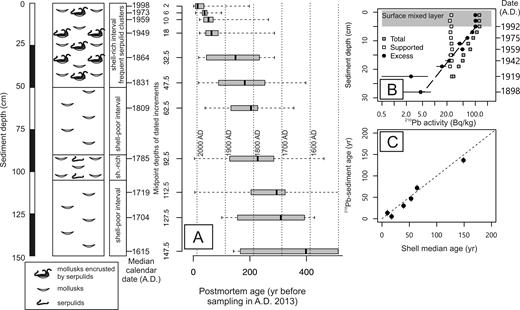 Sediment core M28, collected in A.D. 2013 at 11 m water depth in the Bay of Panzano (Gulf of Trieste). A: Radiocarbon-calibrated amino acid racemization (AAR) ages of Corbula gibba shells. Boxplots show median ages and the 25th and 75th percentiles (whiskers denote minima and maxima). One shell at 112.5 cm is 816 yr old, and 2 shells at 147.5 cm are 689 and 1637 yr old. B: Downcore changes in 210Pb and ages based on the constant flux–constant sedimentation model. C: The correlation between the 210Pb chronology and AAR chronology based on the median age of C. gibba observed at a given depth below the sediment surface. The stippled 1:1 line represents perfect agreement between the two age estimates.