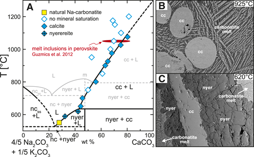 A: CaCO3-(Na,K)2CO3 pseudobinary at the natural Na/K ratio of ∼4. Thermal maximum (m; T is temperature) in the synthetic system (in gray, after Cooper et al., 1975) is suppressed in the natural Oldoinyo Lengai system (in black), where calcite (cc) disappears in favor of nyerereite (nyer) at a peritectic of ∼630 °C. Red oval indicates the array of carbonate melt inclusions in perovskite at the preferred homogenization temperature of 1050 °C (Guzmics et al., 2012) (nc—sodium carbonate; ss—solid solution; L—liquid). B: Rounded calcite crystals within carbonatite melt at 925 °C. Calcite quench forms spinifex texture in carbonatite melt. C: Peritectic reaction between calcite and nyerereite. Calcite is entirely mantled by newly formed nyerereite at temperatures ≤620 °C.