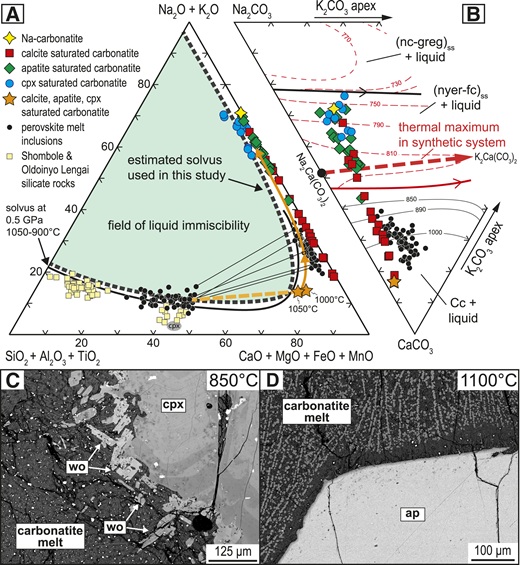 A: Whole-rock compositions of the East African Rift Oldoinyo Lengai and Shombole volcanoes compared to perovskite-hosted melt inclusions (Guzmics et al., 2012) and experimental carbonatite melt compositions (in wt%; projection after Freestone and Hamilton, 1980). Black line represents experimentally determined nephelinite-carbonatite melt miscibility gap at 0.5 GPa (Kjarsgaard and Peterson, 1991); gray dashed line shows the miscibility gap inferred for this study; solid orange line represents the calculated liquid line of descent from a calcic carbonatite melt considering calcite, apatite, and clinopyroxene fractionation; dashed orange line is the suggested tie line between experimentally determined multiphase saturated carbonatite melt and an average conjugate silicate melt corresponding to melt inclusions in perovskite from Guzmics et al. (2012). For references of silicate whole-rock compositions (yellow squares), see the Data Repository (see footnote 1). B: Carbonatite melts plotted into the Na-K-Ca-carbonate ternary. Black liquidus surface elements are valid for both the natural and synthetic system; red elements are valid for the synthetic system after Cooper et al. (1975). Cc—calcite; fc—fairchildite, greg—gregoryite, nc—sodium carbonate, nyer—nyerereite. C: Peritectic reaction between clinopyroxene (cpx) and carbonatite melt forming euhedral wollastonite (wo). D: Apatite-saturated carbonatite melt at 1100 °C showing apatite (ap) quench crystallization.